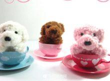 购买茶杯犬
