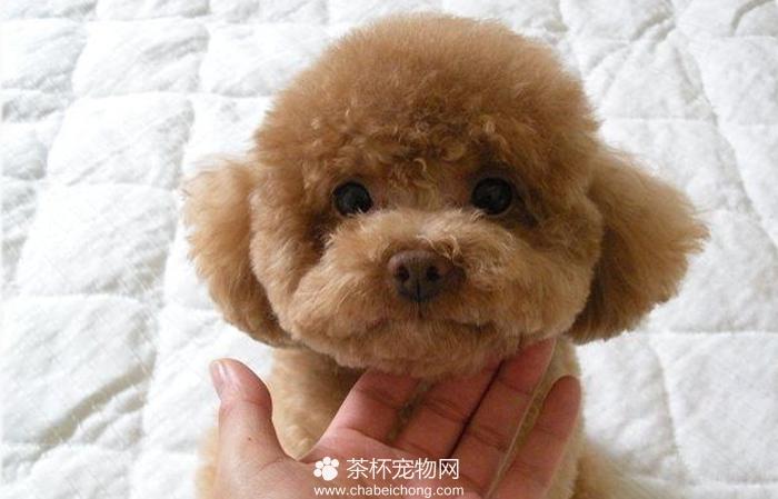 生理 画像 犬