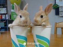 迷你兔子视频