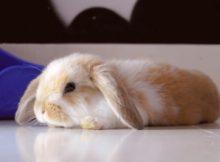 翻滚的小兔子