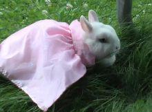爱臭美的兔子
