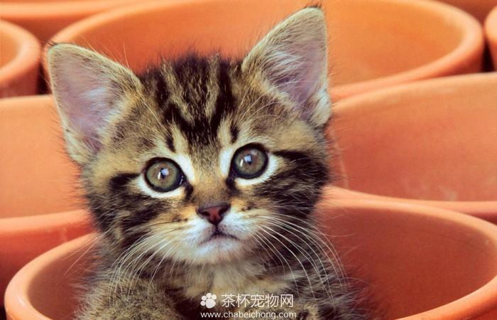 茶杯小猫咪(四)