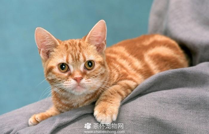 呆傻萌猫咪(三)