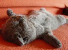 奇葩的猫咪睡觉囧姿