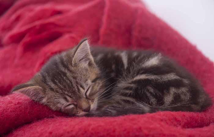 奇葩的猫咪睡觉囧姿(二)