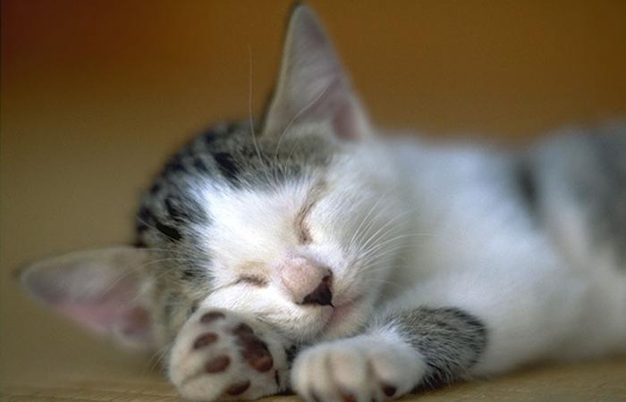 奇葩的猫咪睡觉囧姿(三)