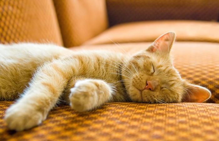 奇葩的猫咪睡觉囧姿(四)