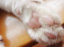 可爱的猫爪图片