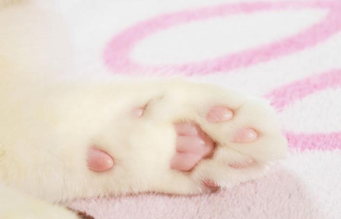 可爱的猫爪图片(二)