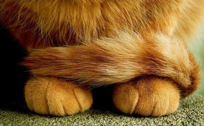 可爱的猫爪图片(五)