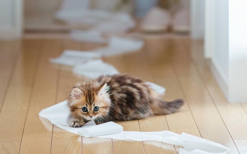 可爱幼崽猫咪图片