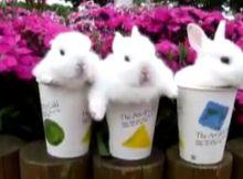 三个萌兔子
