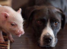 猪猪和狗狗