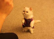 训练茶杯猫