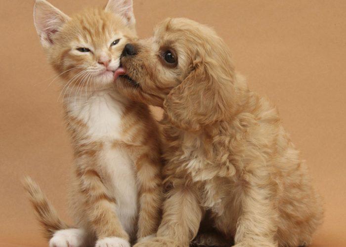 猫和狗在一起
