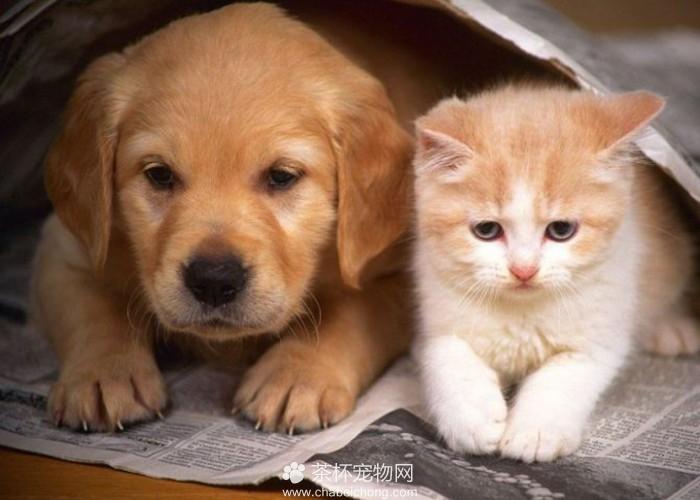 猫和狗在一起(二)