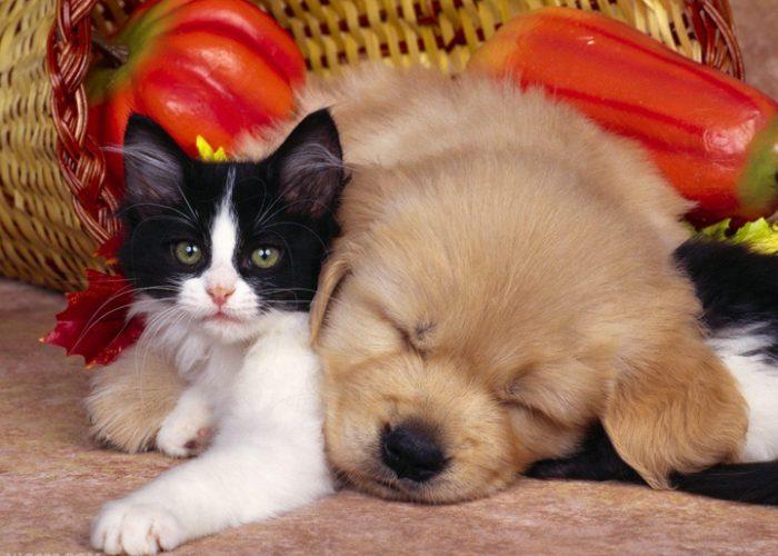 猫和狗在一起(三)