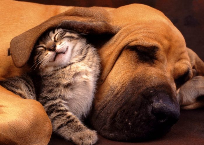 猫和狗在一起(四)