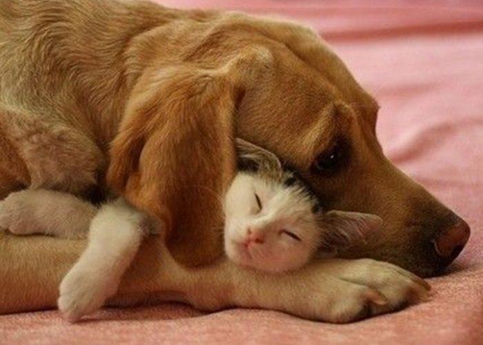 猫和狗在一起(五)