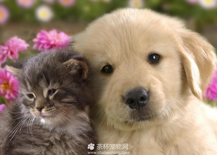 猫和狗在一起(六)