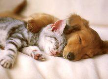 猫和狗在一起(七)