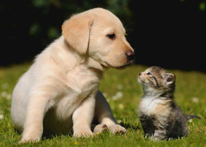 猫和狗在一起(九)