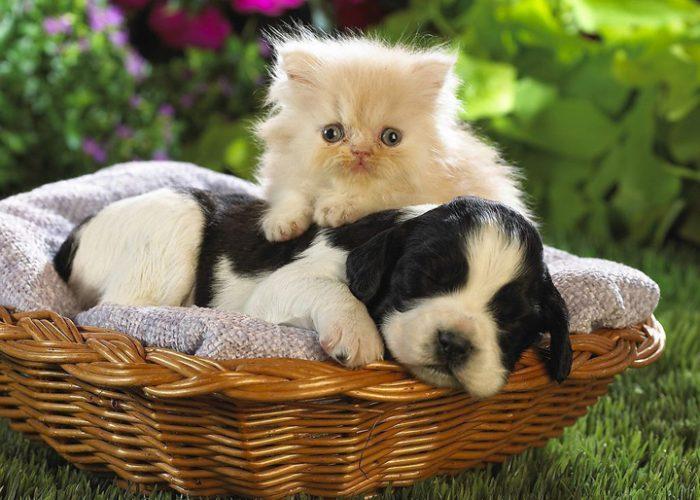 猫和狗在一起(十)