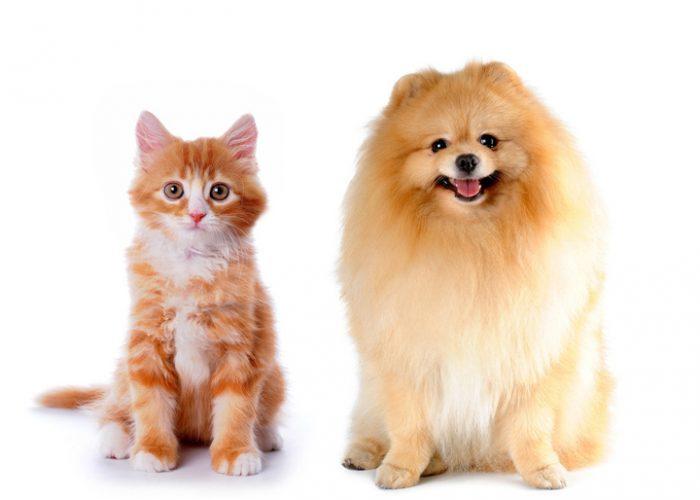 猫和狗在一起(十一)