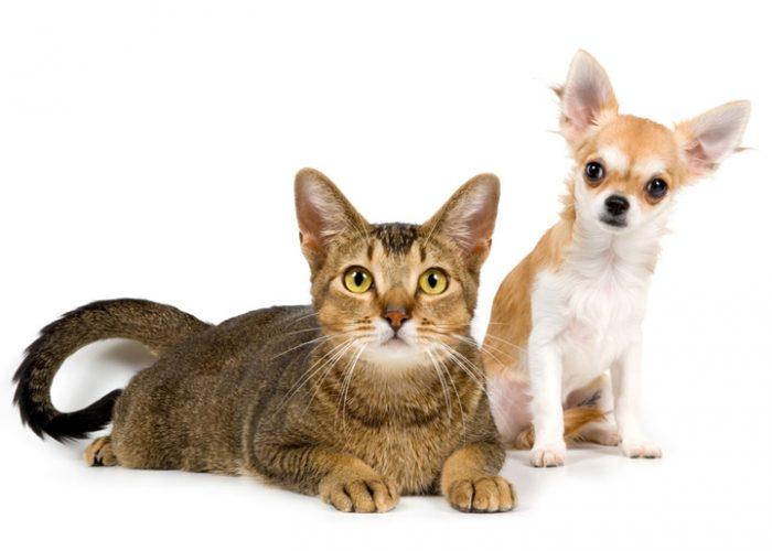 猫和狗在一起(十二)