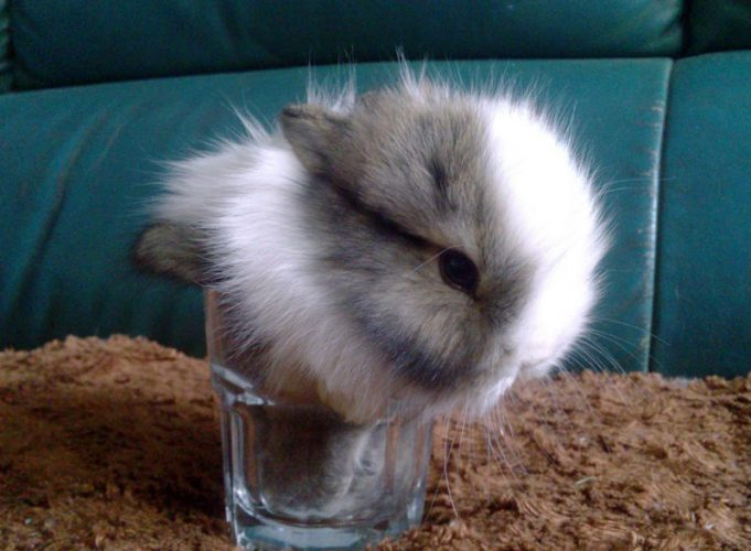 萌人的迷你兔(五)