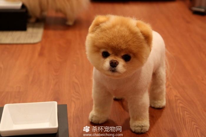 Boo 世界上最可爱的狗狗(六)