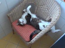 各种猫咪的奇葩睡姿