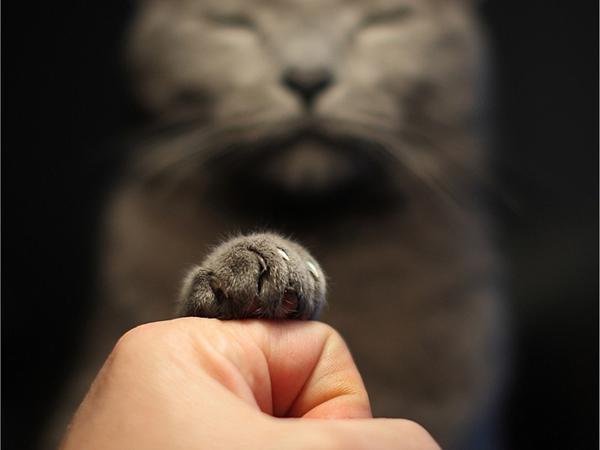 可爱的猫爪图片(三)