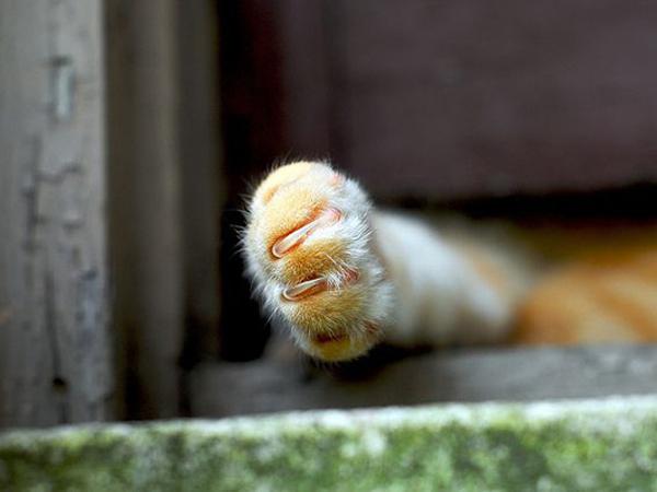 可爱的猫爪图片(四)