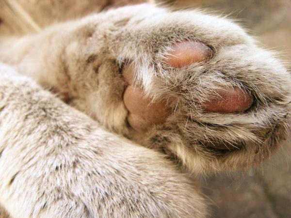 可爱的猫爪图片(六)