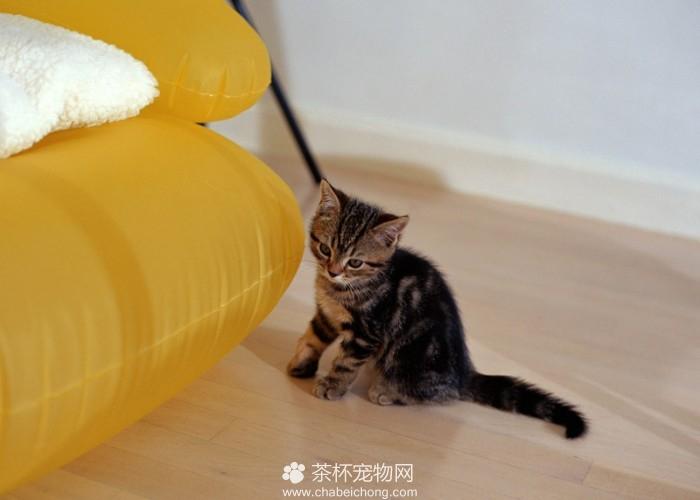 茶杯猫摄影(七)