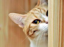 猫咪不爱洗澡怎么办
