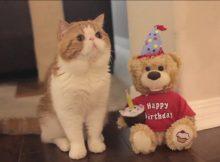 肥猫的生日礼物