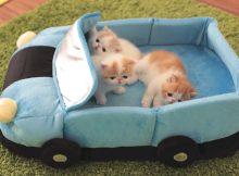 玩具车里的三个小猫咪