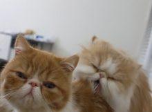 奇怪癖好的猫咪