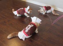 糖果衣服的可爱猫咪