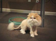 狮子王风格的猫咪