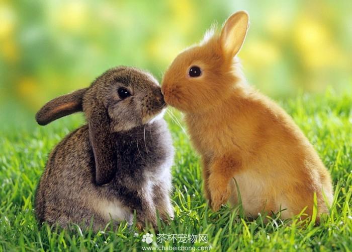 可爱迷你兔(七)