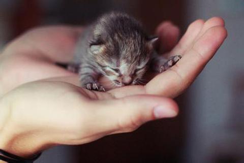 刚出生的茶杯猫图片