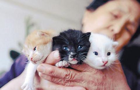 刚出生的茶杯猫图片图片