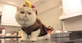 超能吃的包子脸猫咪