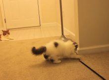 敏捷的猫咪