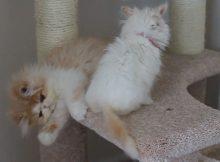 两个猫咪在玩耍