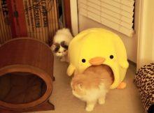 两个在玩耍的猫咪