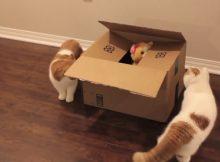 送给猫咪盒子里的礼物